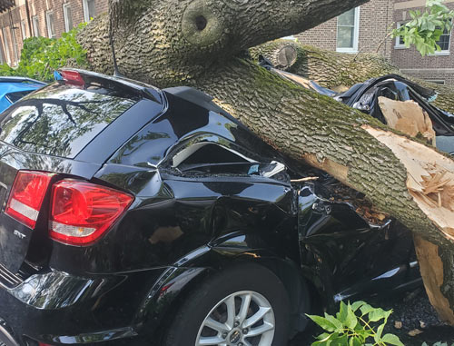 A Cut Above Tree Service - South Jersey Emergency Storm Tree Damage